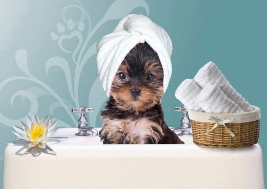 cute-dogs-puppies-spa-Favim.com-928114